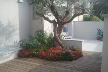 התאמת עצי פרי לעיצוב הגינה